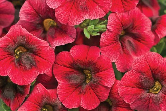 Top 10 New Plants for 2014