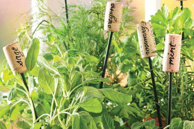 Garden DIY Herb Markers
