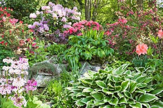 Gardening Made Easy: 60+ Tough Plants