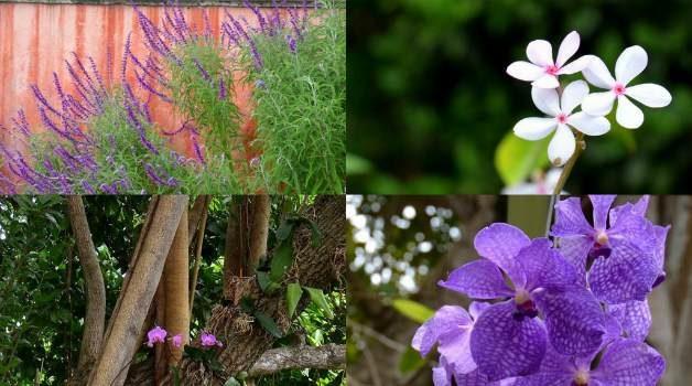 Vizcaya_Flower_Garden