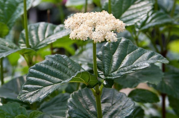 Gardening Made Easy: 60+ Tough Plants