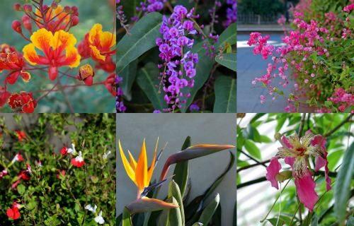 Flowering_Plants