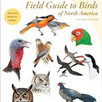 The Best Bird Field Guides for Birders