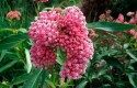 Top 10 Foolproof Plants for Kids: Milkweed