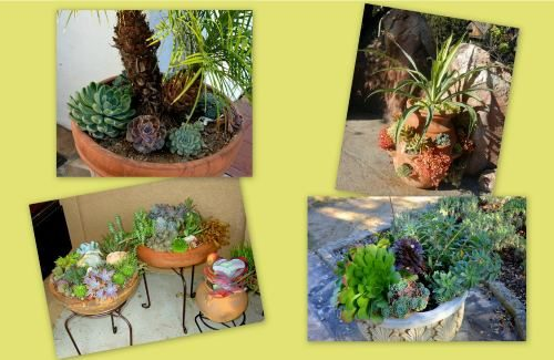 Succulent_Containers