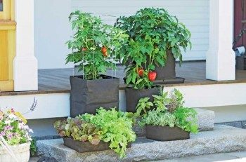 Gardening Made Easy: Alternative Gardening Ideas