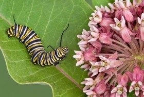 Attracting Butterflies: 11 Must-Have Host Plants