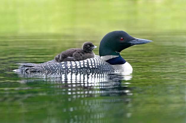 Birding Basics to Bird-Watching by Habitat