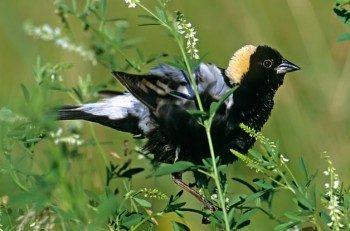 Grassland Birds: Hidden Gems of the Prairie