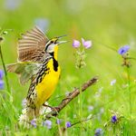 Prairie Birds: The Stunning Species of the Grasslands