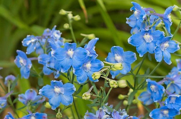 Top 10 Hummingbird Flowers and Plants