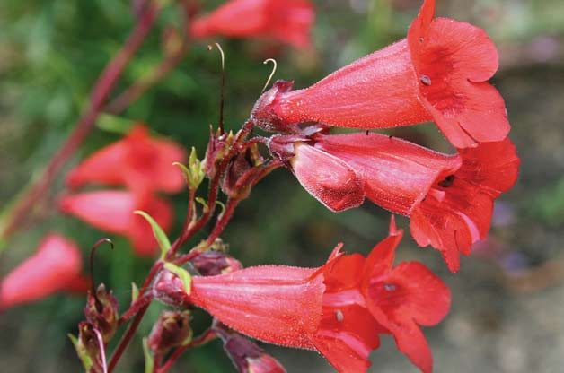Top 10 Flowers for Hummingbirds | Plants that Attract ... 10 Most Beautiful Butterflies