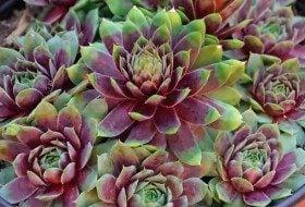 Top 10 Lists for Gardeners