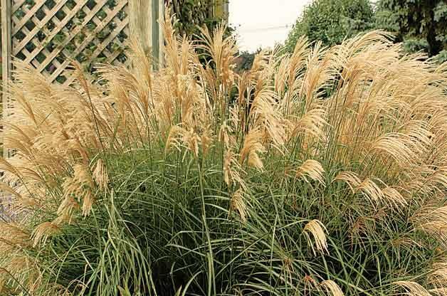 Top 10 Year-Round Perennials: Japanese silver grass