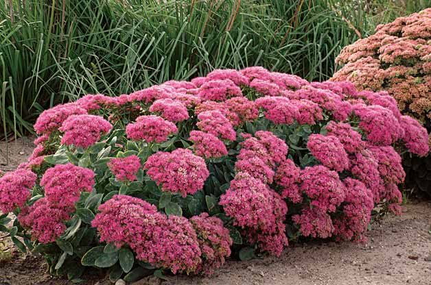 Top 10 Year Round Perennials