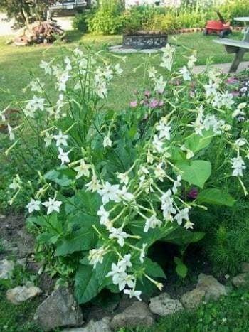 After Five Flower Garden
