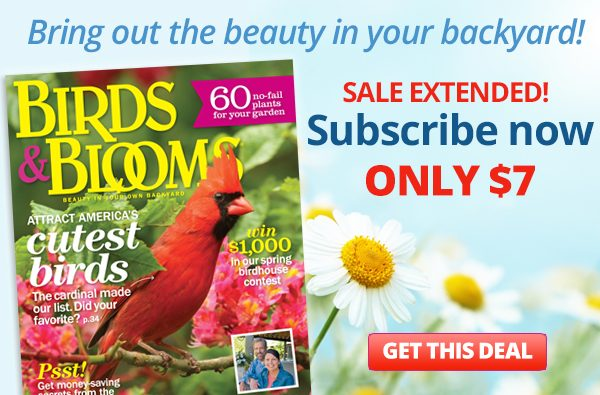 birds and blooms america s 1 backyard birding and