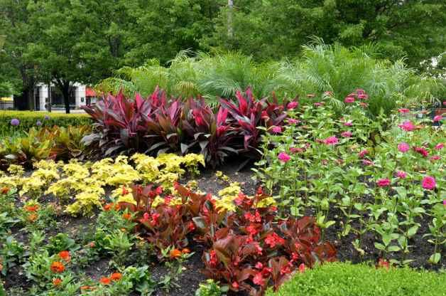 Garden Basics - research plants before buying