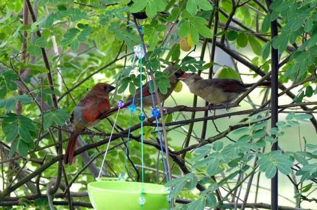 DIY Bird Feder Cardinal Family