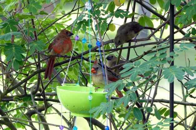 DIY Bird Feeder Cardinal famliy