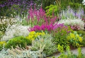 40+ Drought Resistant Flowers and Plants