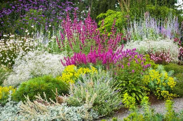 40 drought resistant flowers and plants birds and blooms for Flowering landscape plants