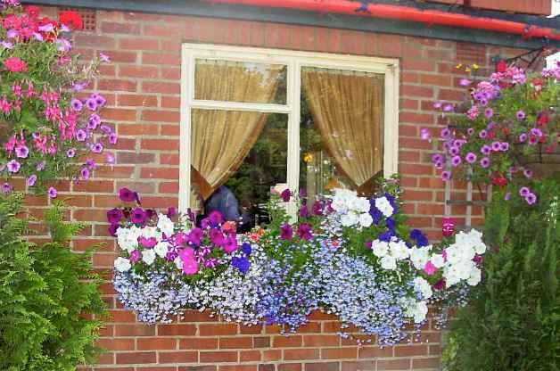 Flowers Oxford
