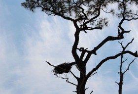 Gulf Shores Alabama birding