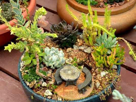 Succulent Fairy Garden 2