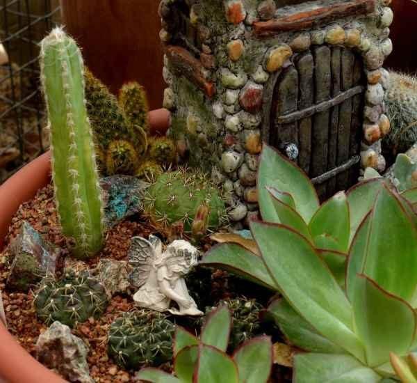 Succulent Fairy Gardens