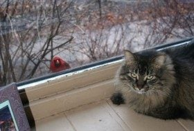 Friday Funny Photography: Cat and Cardinal