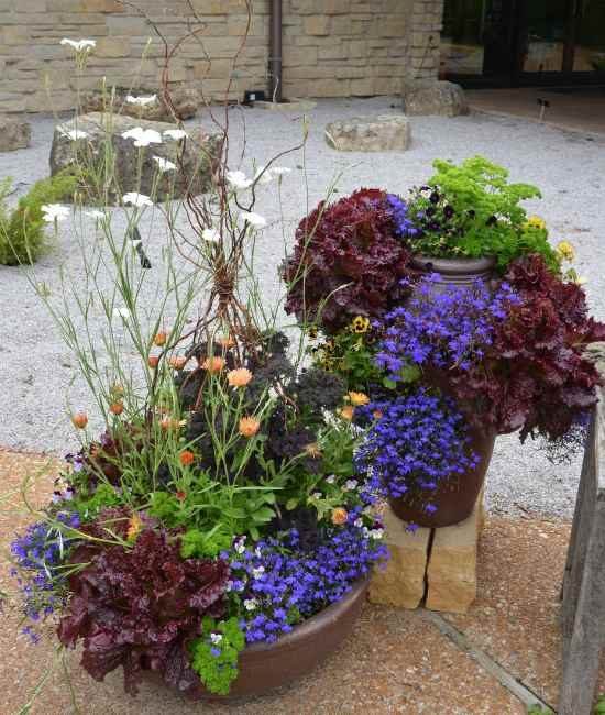 Vegetables, herbs and flowering annuals in containers.