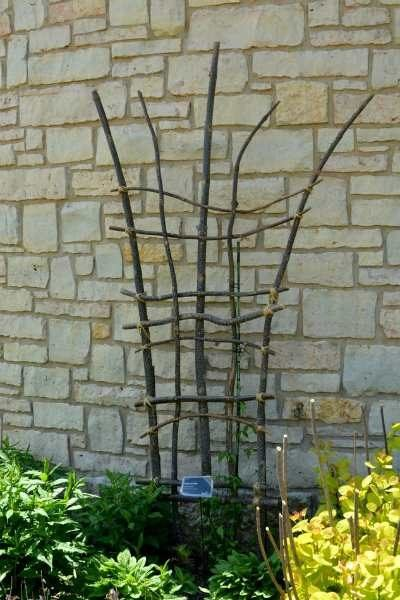 DIY trellis from tree branches