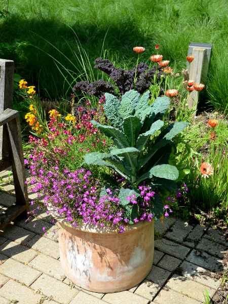 Kale planted among flowering annuals.