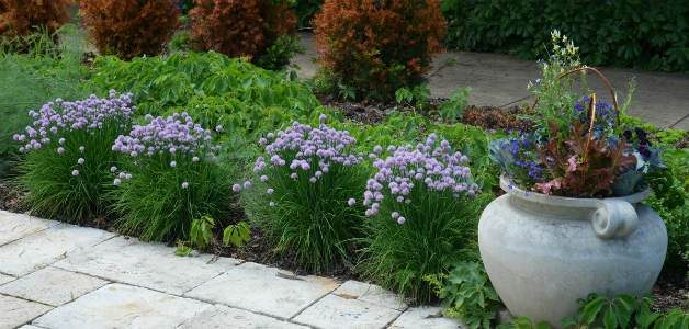 Flowering chives alongside a container filled with flowers and vegetables.
