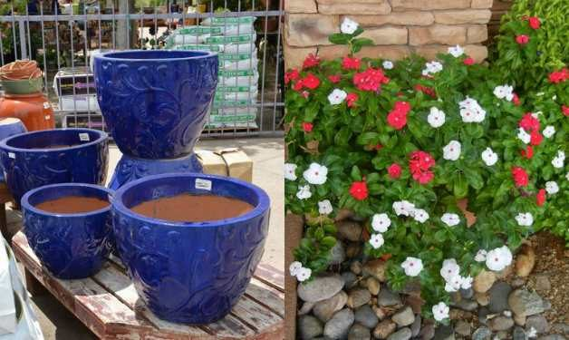 White and red vinca contrast beautifully with blue containers.