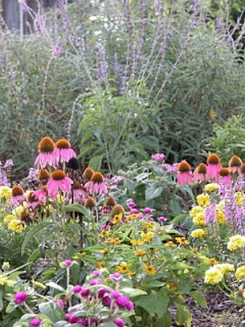 Fave Five: Plant Tips for Attracting Butterflies | Birds ...