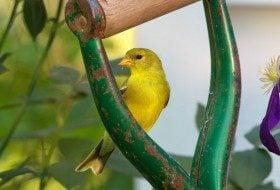Backyard Birding in Small Spaces