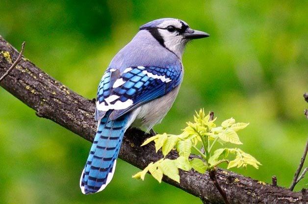 bad birds in the backyard