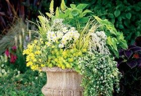 Container Ideas: Perennials in Pots