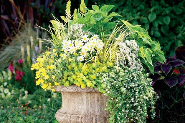"Container Ideas: If you're using a container ""recipe,"" just switch out one of the annuals in the diagram for a perennial instead."