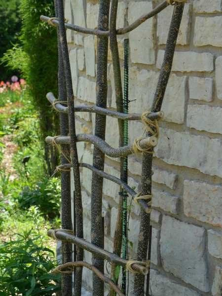 diy tree branch trellis