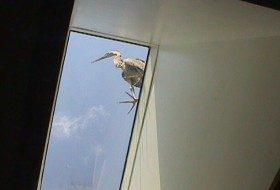 Friday Funny Photography: Heron the Roof!