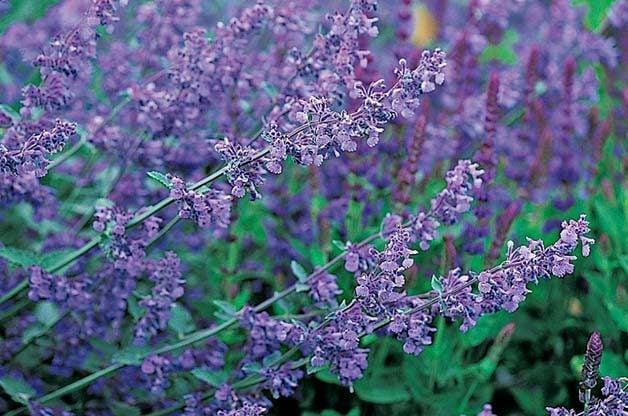Top 10 Purple Plants for Your Flower Garden