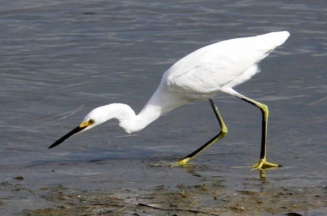 Low Tide Birding Tips