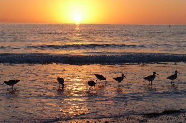 Low Tide Birding Tips
