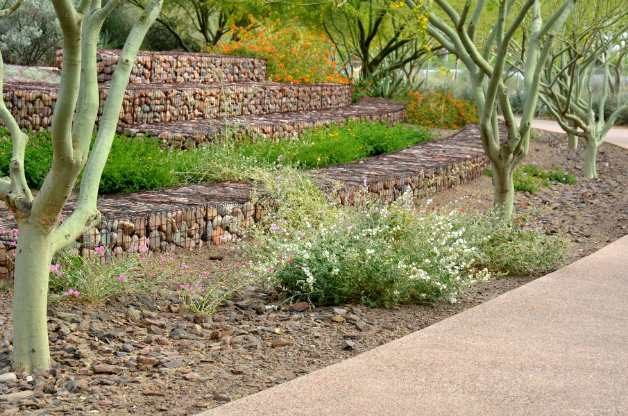 Gabion walls and drought tolerant plants.