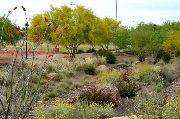 Beautiful, drought tolerant landscape