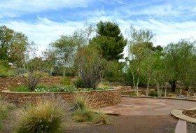Scottsdale Xeriscape Demonstration Garden Ocotillo