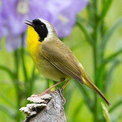 Identifying Birds by Their Song | Birds & Blooms